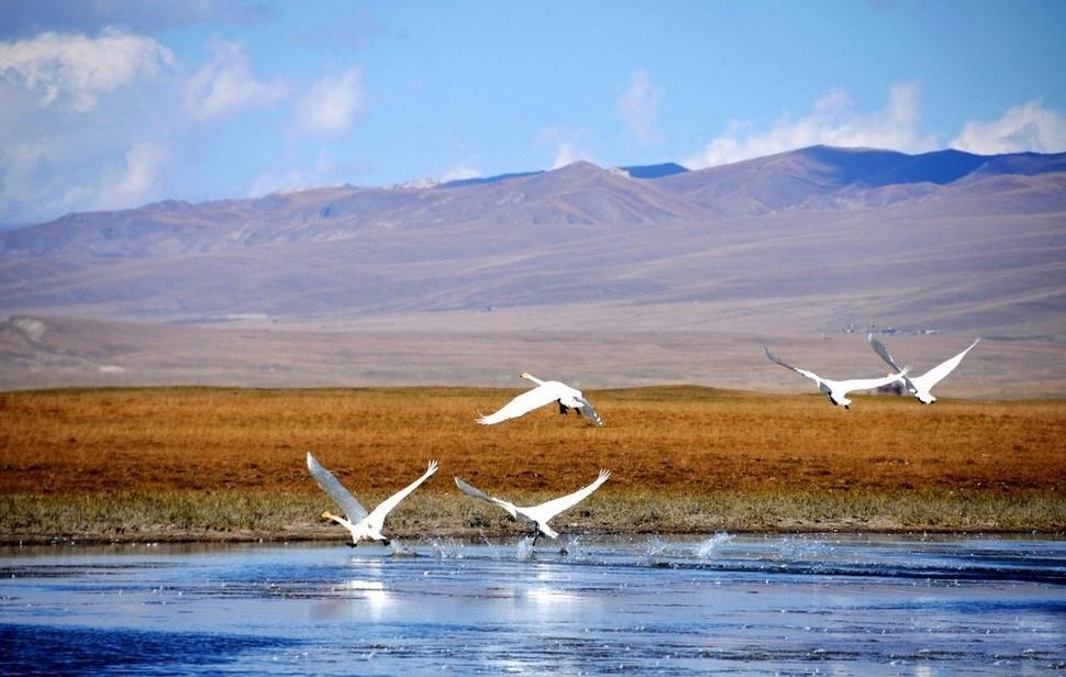 新疆巴音布魯克天鵝湖觀賞最佳時間是什么時候