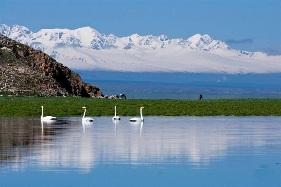 新疆巴音布魯克天鵝湖風景最美時節!