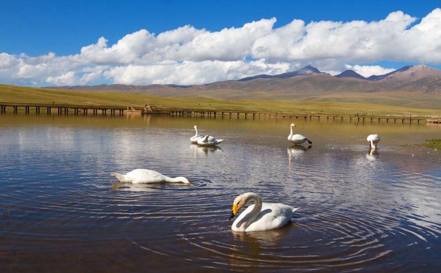 新疆巴音布魯克旅游住宿去哪里?