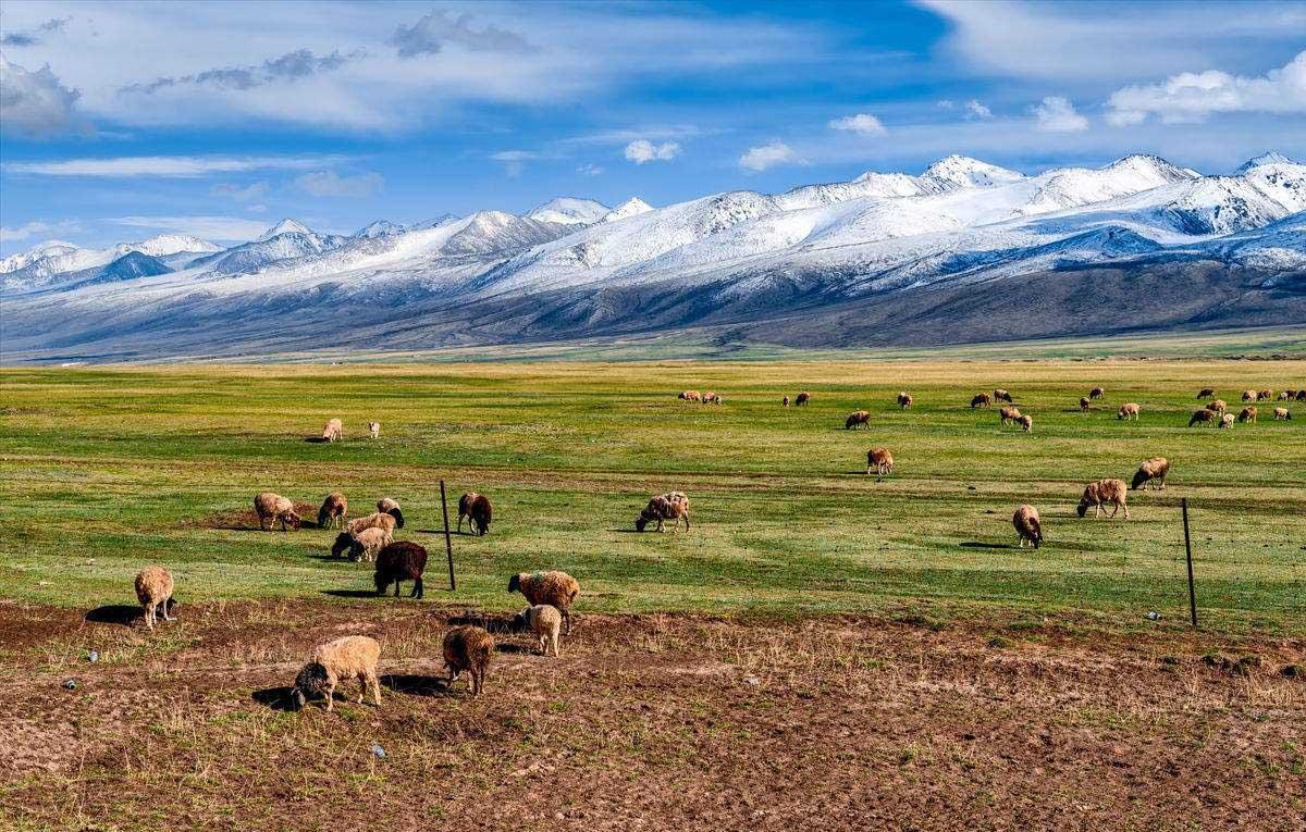 新疆巴音布魯克草原旅游最佳線路